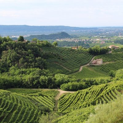 Tuscany wine region in Italy - the place that ignited by love for the wine industry