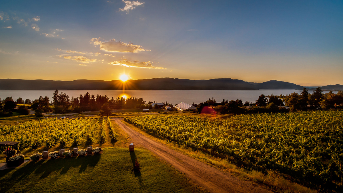 Tag: kelowna wine tours
